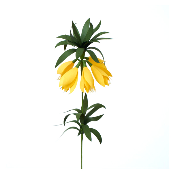 fritillaria yellow